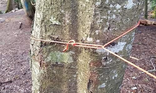 Trucker Hitch Tree