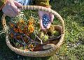 34 Wild Plants Every Prepper Should Know