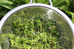 Wild Foods You Should Forage This Summer