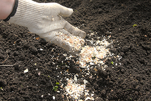 What You Should Do With Your Eggshells
