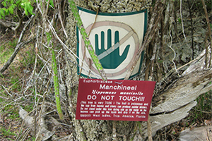 The Most Dangerous Tree In The U.S.