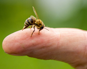 10 Insects You Should Never Kill On Your Property