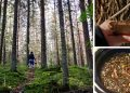 14 Survival Trees You Can Forage For Medicine