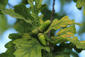 The Most Common Edible Trees Growing In Your State